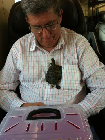 Filomena... la tartarughina curiosa